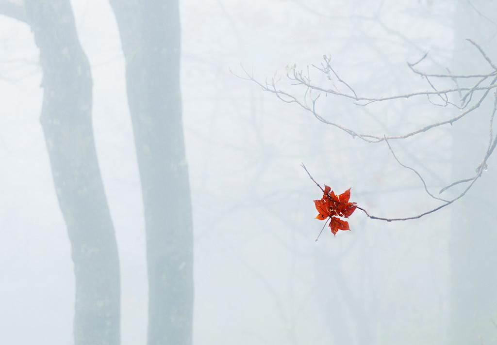 深圳杯优秀  作者:Xin Li 国家:China  标题:Red