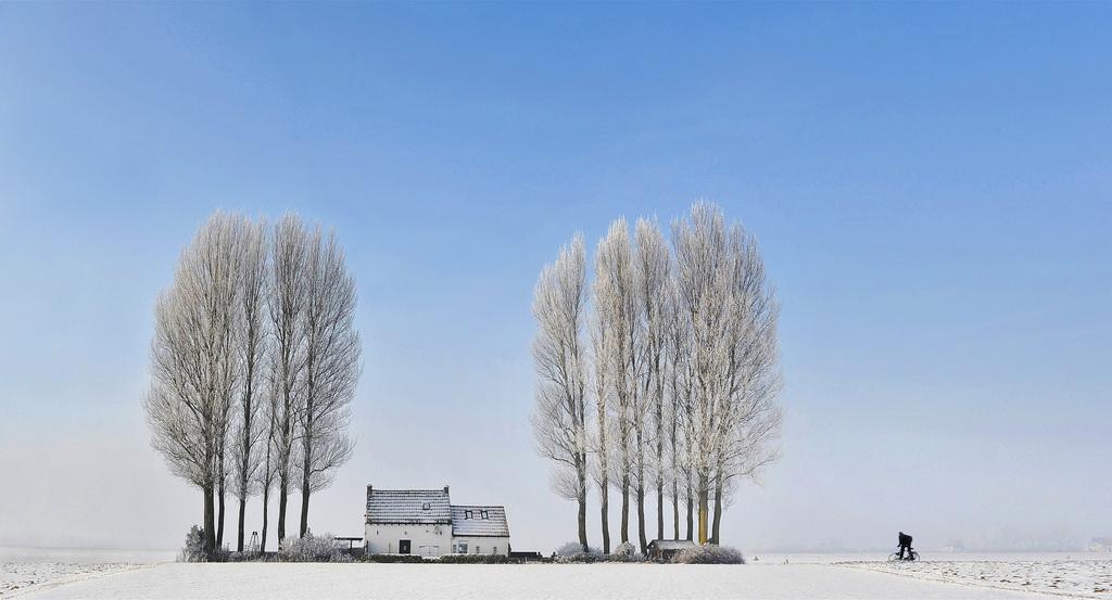 CAPA银牌 作者:Daniel LYBAERT 国家:Netherlands 标题:Landschap en fietser