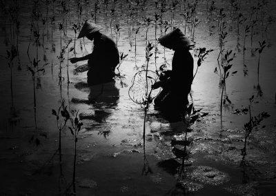 GROW FOREST / DO HIEU TRUNG DO HIEU TRUNG / Viet Nam