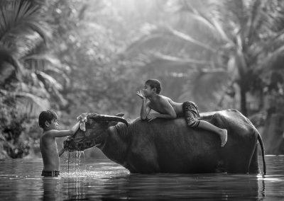 Buffalo bathing / Alexandrino Lei Airosa 艾羅沙 / Macau