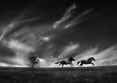 Lajos Nagy/Romania